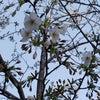 ちょい咲きの画像