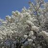 春分図と自分のチャートを確認してみるの画像
