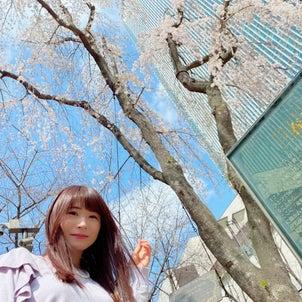 三春桜の画像