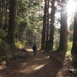 森のたからもの 30の画像