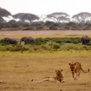 アフリカ・ケニアの日常の画像
