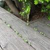 ウッドデッキから からし菜の発芽!の画像