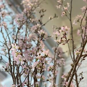 春です。の画像