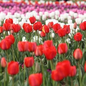 「春分に思う」の画像