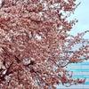 第二回 大阪城公園練習会の画像