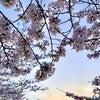 桜咲いたの画像