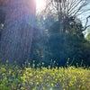 春です♪ 春ですね♪の画像