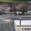 桜、もうちょいかな?の画像