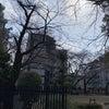 オニ公園の桜の画像