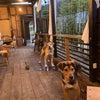 兄弟犬の会の画像