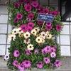 花屋さんに合わせたパープルグラデーション 藤沢店の画像