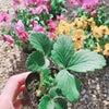 お花でつながる、広がる!の画像