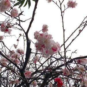 てらてつの春の画像