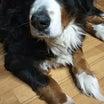 ルナは最後の愛犬