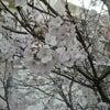 初桜の画像