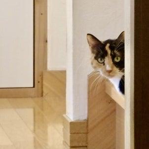三毛猫ミミ日記〜 猫日和を楽しみましたにゃん♫の画像