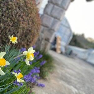 春の花満開ですの画像