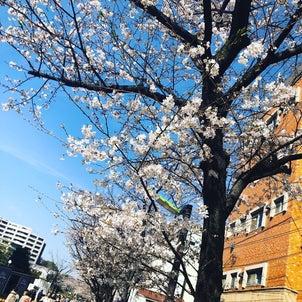 春のワクワクする空気感。の画像