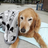 ペットの不調や病気にも、エンソフィックレイキは超オススメですの画像