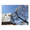 桜の季節です。の画像