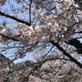 ジュエリーと旅♫東京コスモポリタンlife