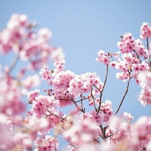 桜の撮り方いろいろの画像