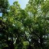 令和初の野音の森の画像