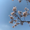 春のお散歩の画像