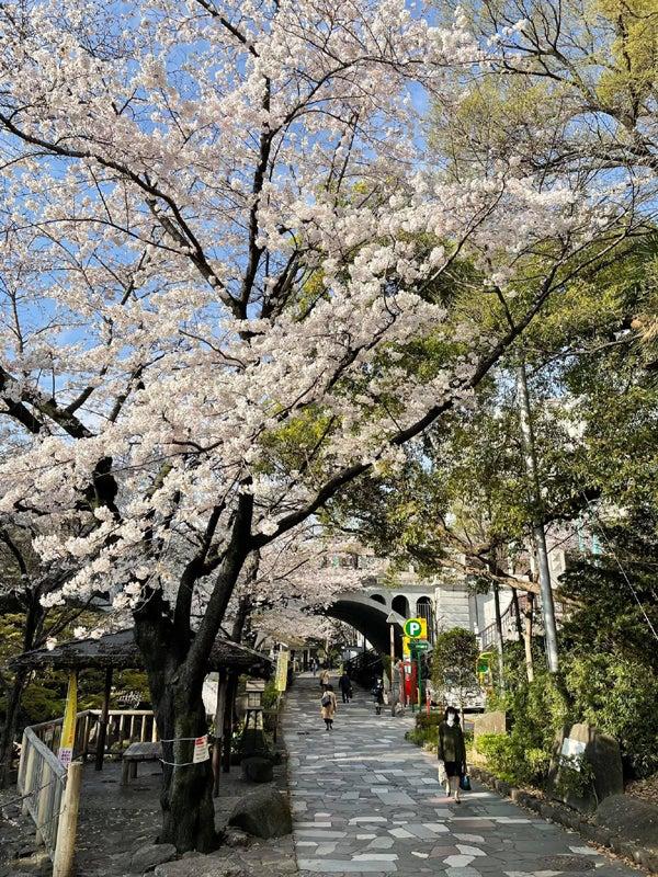 週末のお花見日和店内画像@古着屋カチカチ