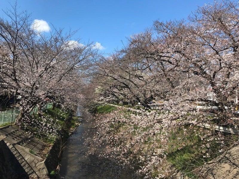 3月31日夜桜ランのご案内の記事より