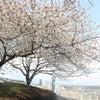 春がやってきましたの画像