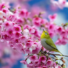 〈 春の訪れ with ピンク 〉桜に癒される季節ですの画像