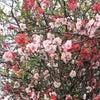 春休みダラダラ娘の「言い訳」に驚きの画像