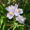 春らんらん♪の画像