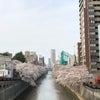 コロナ第3波・東京での店舗商売と2021 目黒川の桜の画像