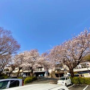 春ですね〜の画像