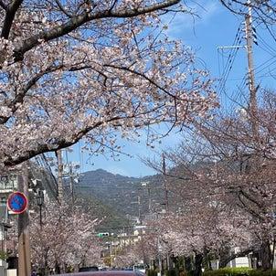 あの日の桜の画像