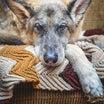 犬猫の寿命は人よりも短い