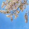 一日ワークのお知らせ【最期の桜のお話】の画像