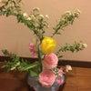 我が家の玄関のお花❗️の画像