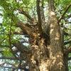 樹木のご縁の画像