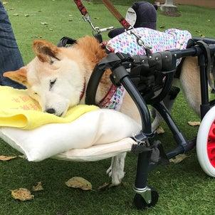 ●リサイクル 1790 柴犬 小町号 L4輪車の画像