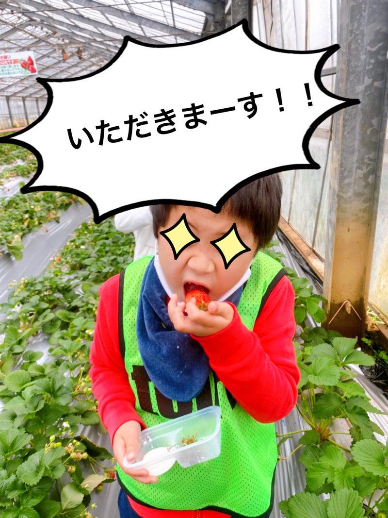 o1915255314917776106 - 3月29日(月)☆toiro金沢文庫40☆【旬のくだものを食べよう】