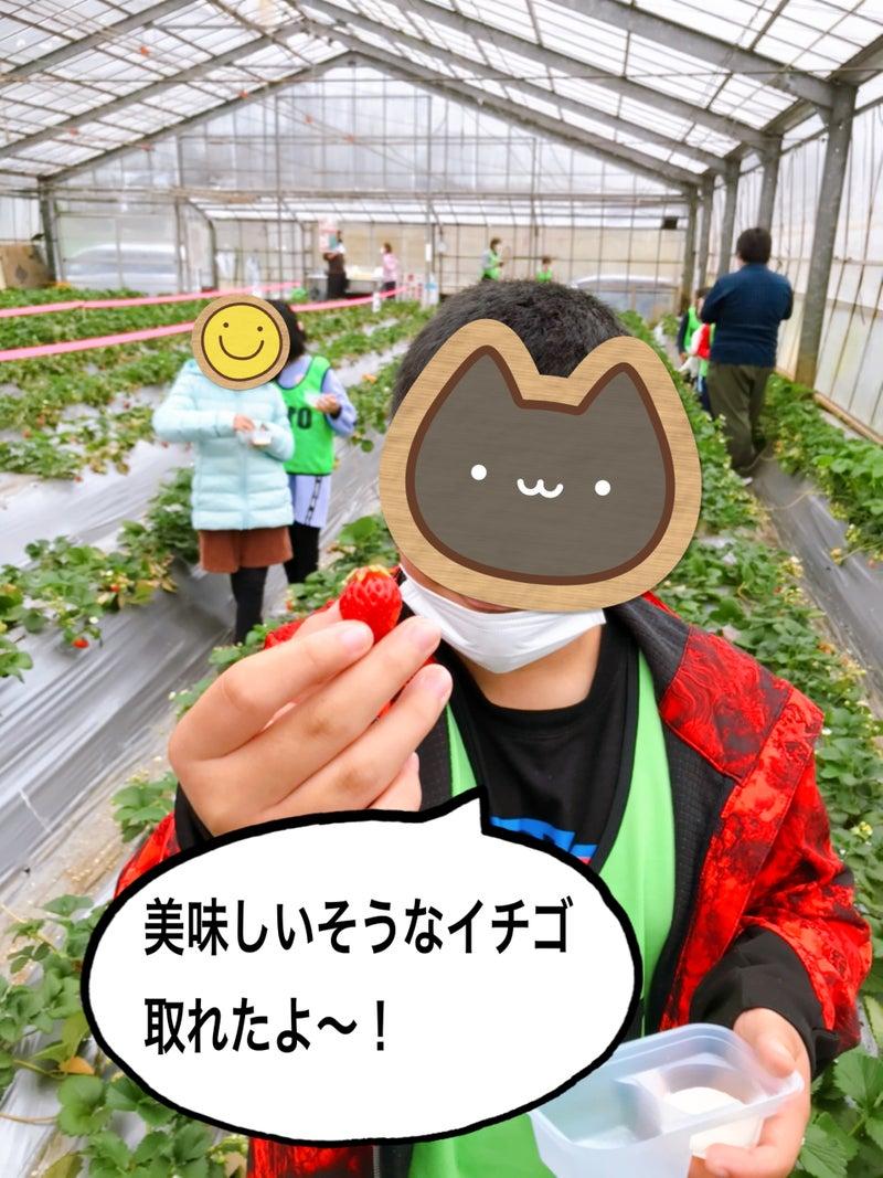 o1915255314917776131 - 3月29日(月)☆toiro金沢文庫40☆【旬のくだものを食べよう】