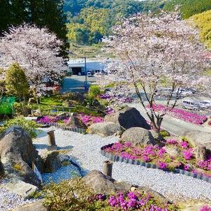 """""""芝桜園「花の森徳重」姶良市蒲生町*を訪れて♪ 芝桜桜綺麗に咲いて山々美しく♪""""の画像"""
