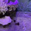 水槽のお魚 NEWの画像
