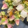 美味しい実を作ってくれるミツバチの画像