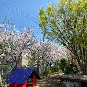 春爛漫の画像