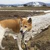 北海道にも春が来たの画像