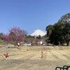 【保育室ぽっぽ】ひよこ組・うさぎ組のお別れ遠足の画像